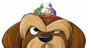 Блохи у собаки