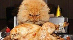 Коту нельзя есть курицу