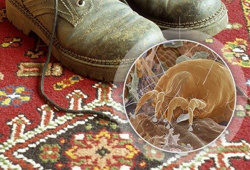 Пылевой клещ на ковре